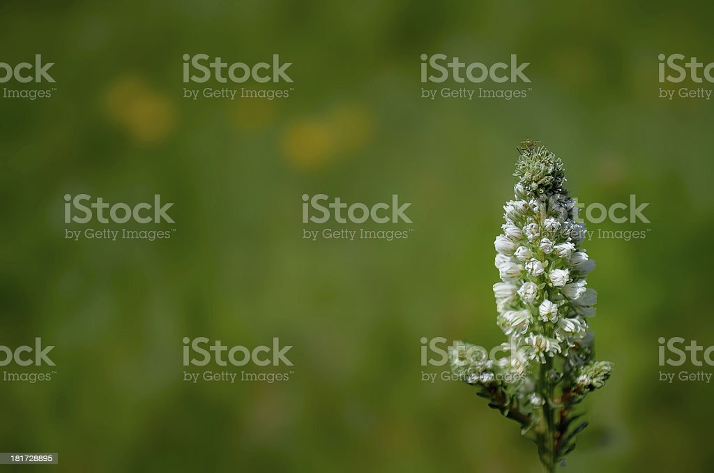Wild plant in forest royalty-free stock photo
