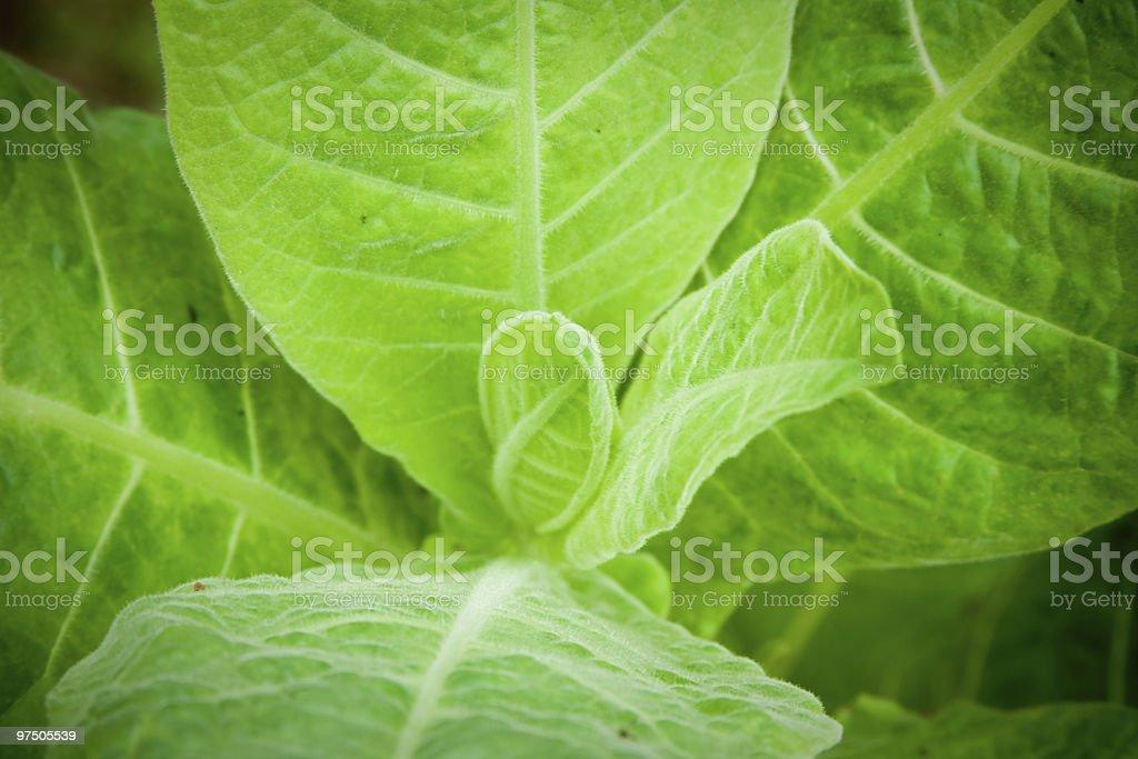 Wild Plant stock photo