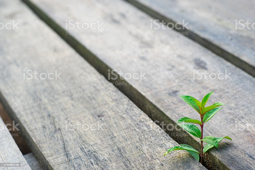 Wild Plant Rising Up stock photo