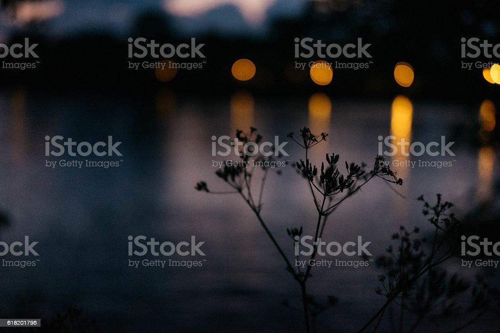 Wild plants during sunset stock photo