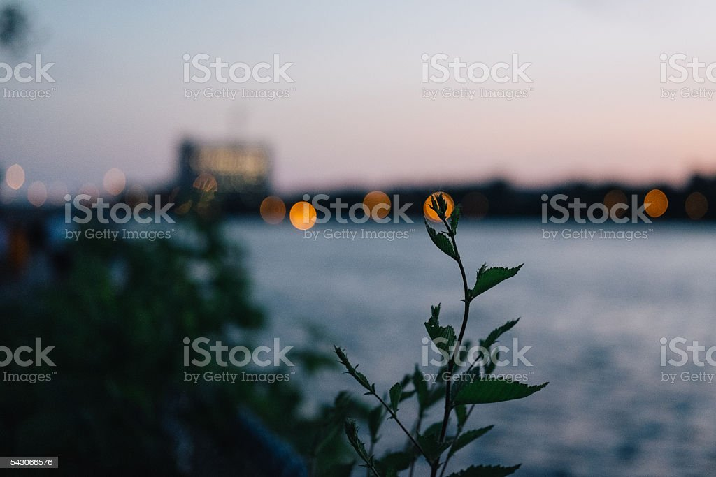 Wild plants in the sunset stock photo