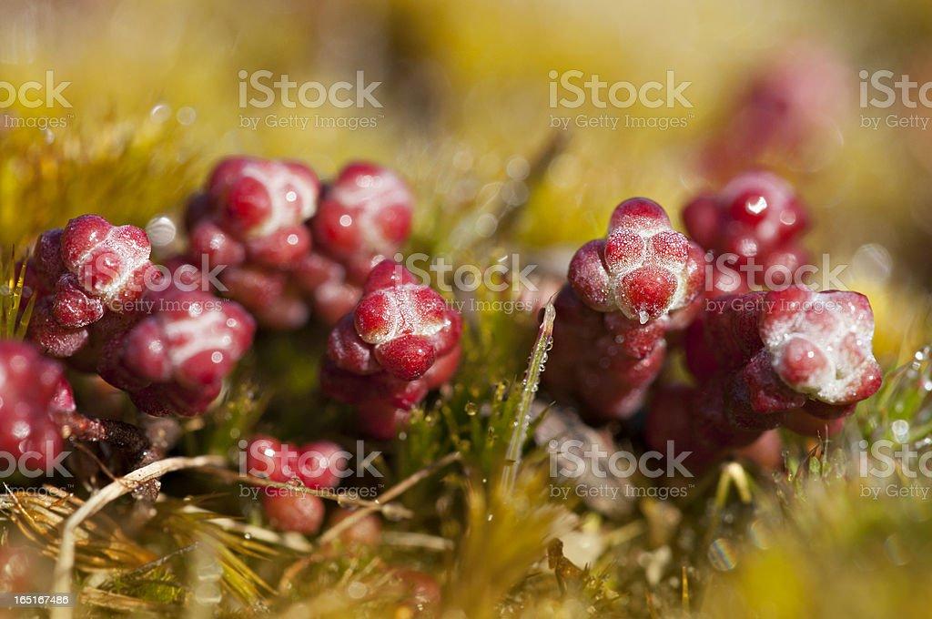 Wild plants royalty-free stock photo