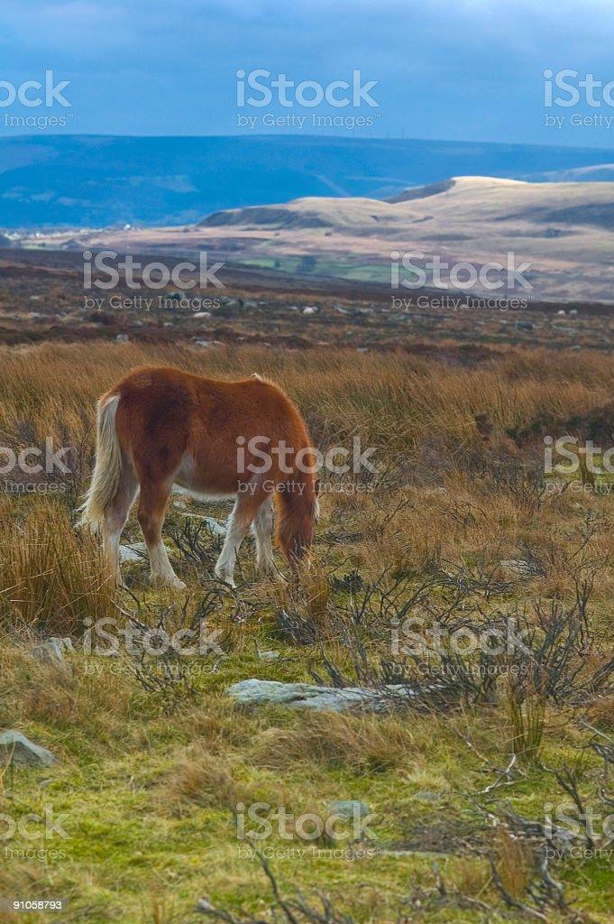 Wild pony on mountainside royalty-free stock photo