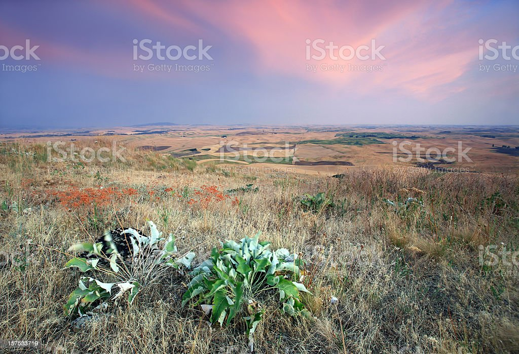 Wild Prairie stock photo