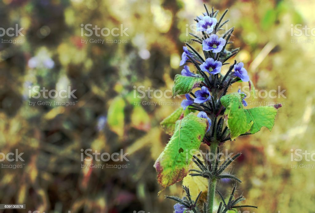 Wild Purple flower stock photo