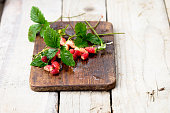 Wild Red Strawberries with Green Leaves