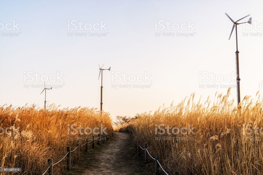 Wild reeds and wind turbines  in haneul park stock photo