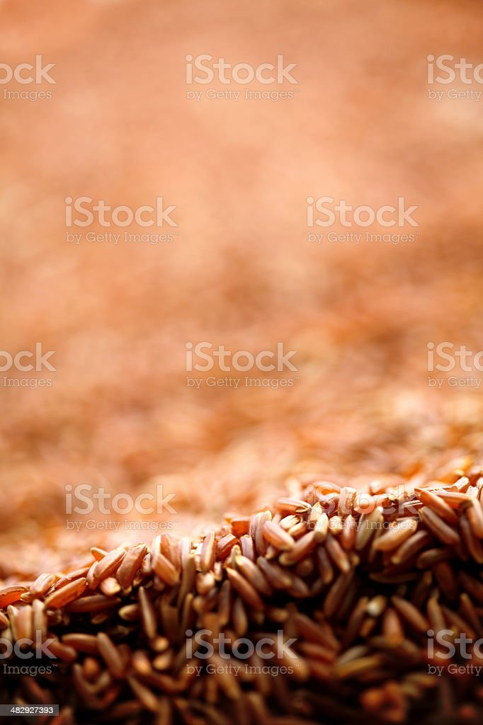 wild rice royalty-free stock photo