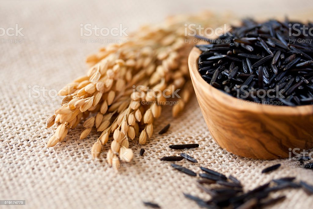 wild rice stock photo