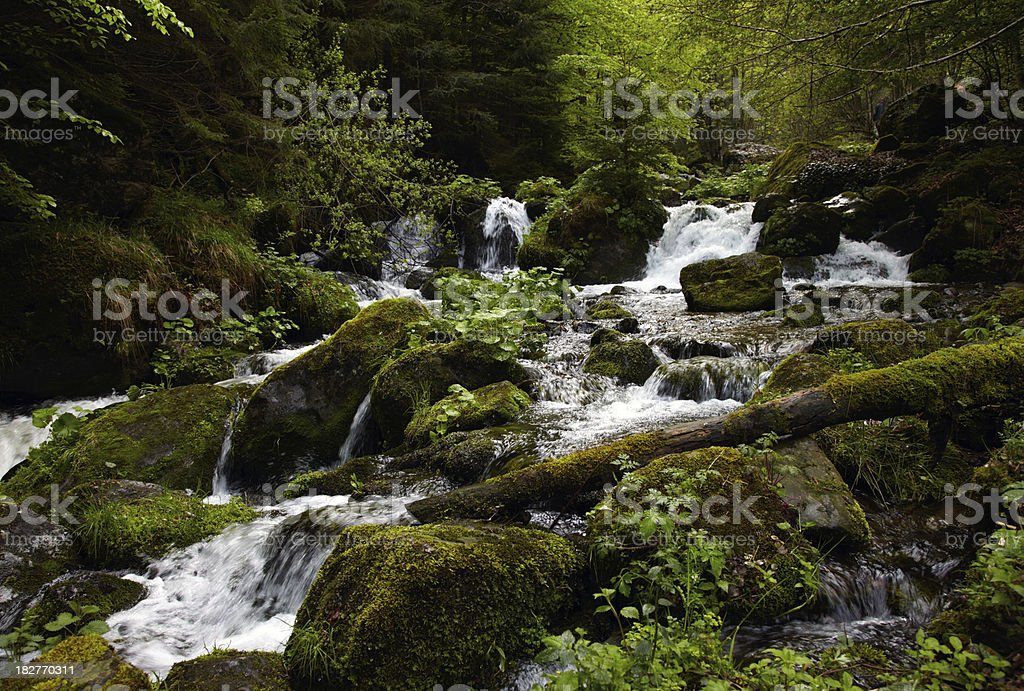Wild river in the Black Forest royalty-free stock photo