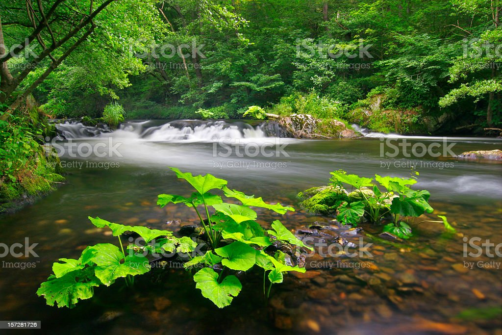 Wild River royalty-free stock photo