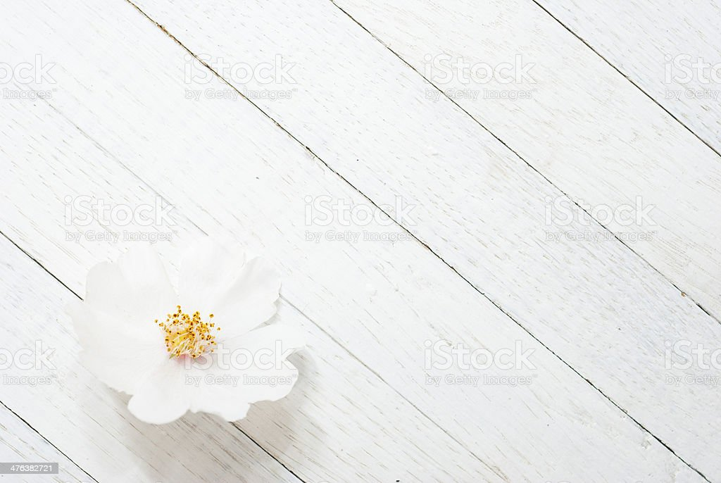 Wild rose royalty-free stock photo