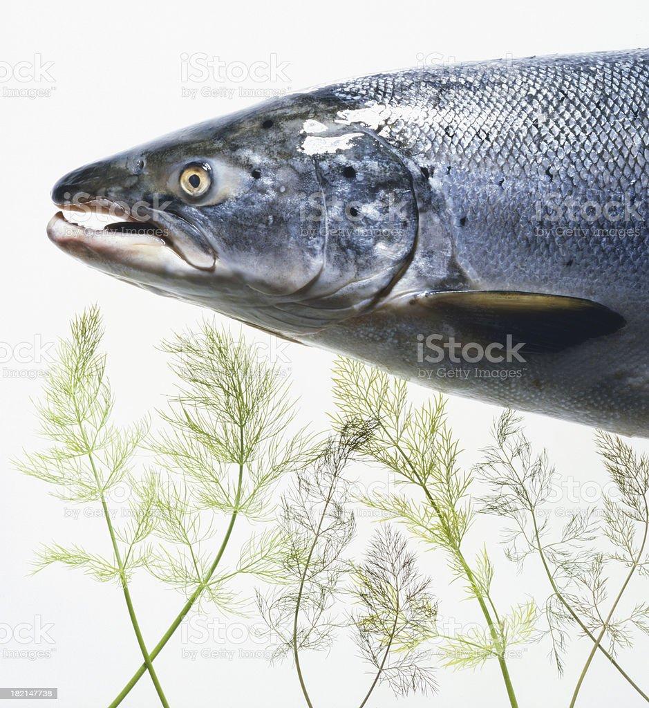 Wild salmon & fennel royalty-free stock photo