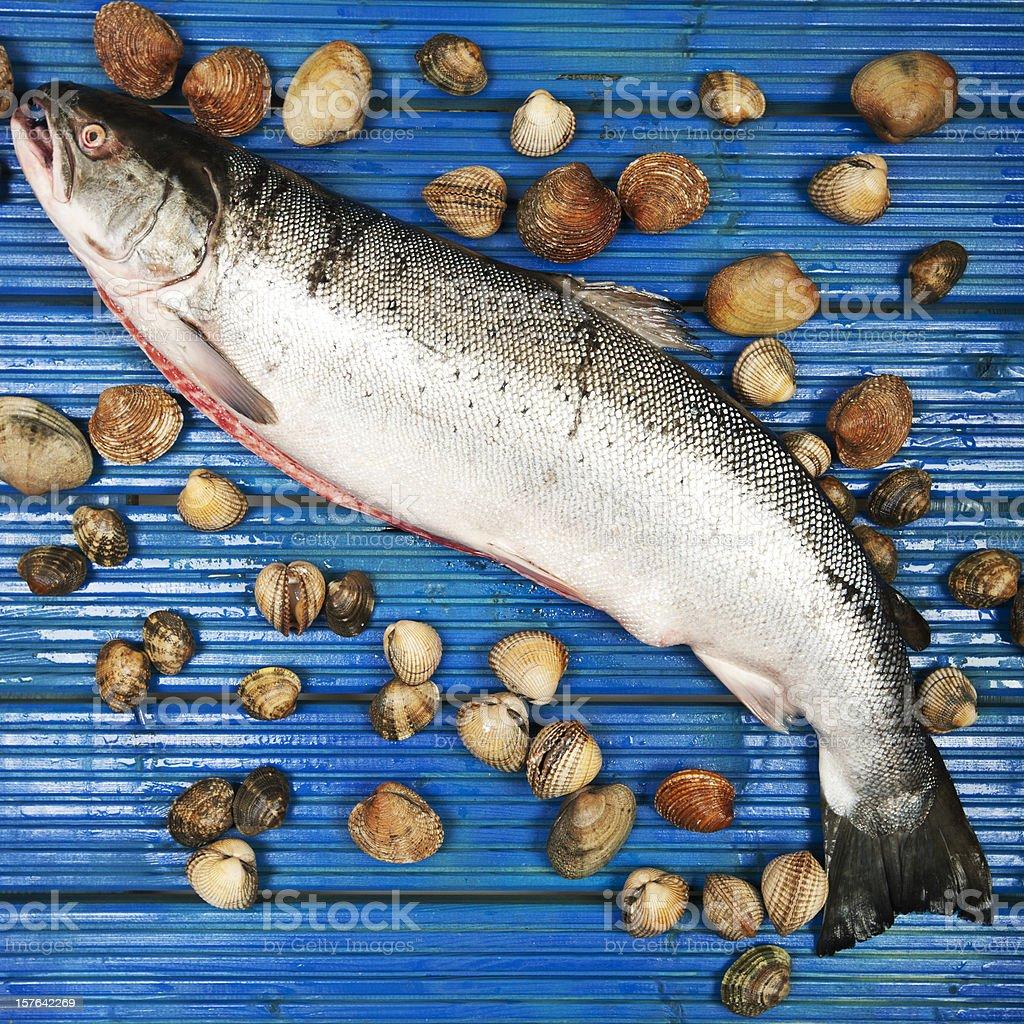 wild sea trout stock photo