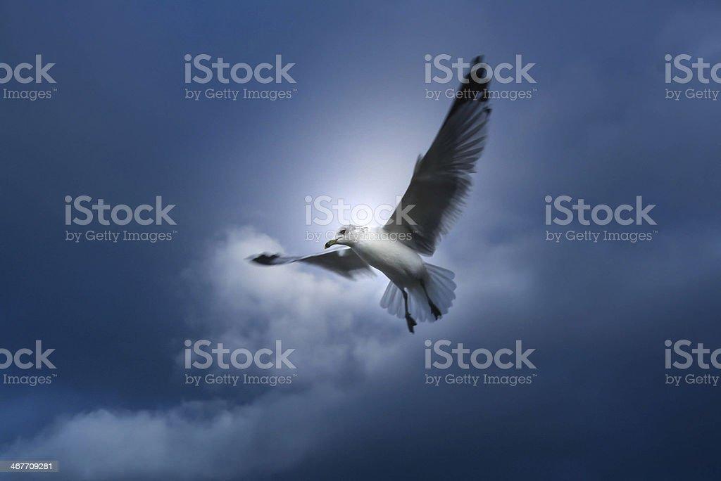Wild seabird royalty-free stock photo