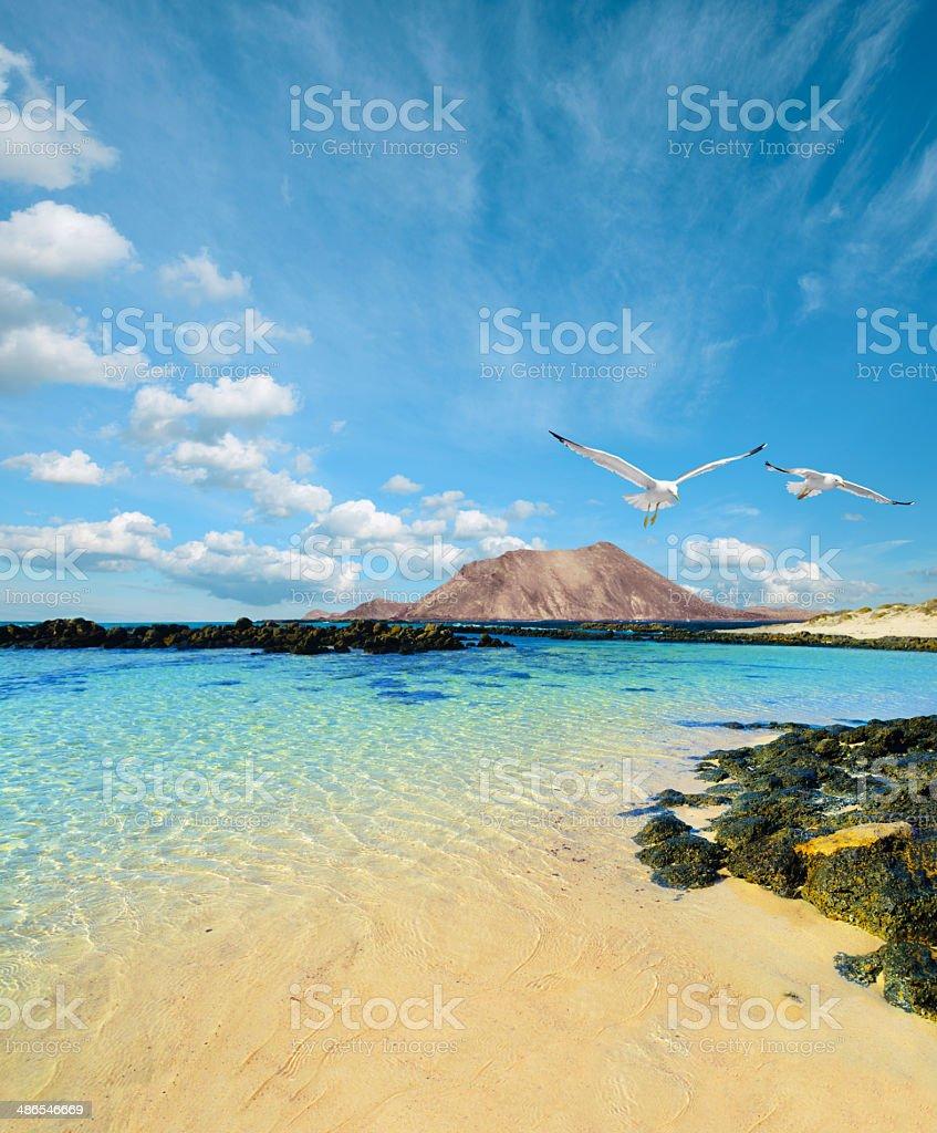 Wild seashore in Fuerteventura stock photo