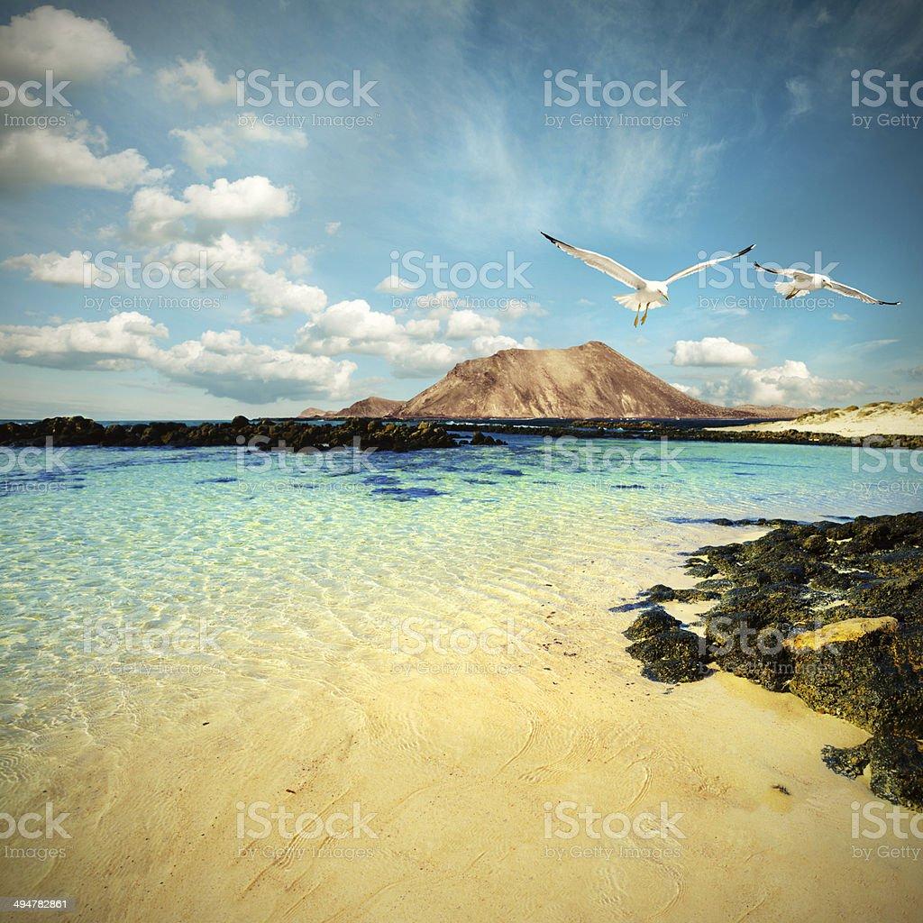 Wild seashore in Fuerteventura, tinted image stock photo