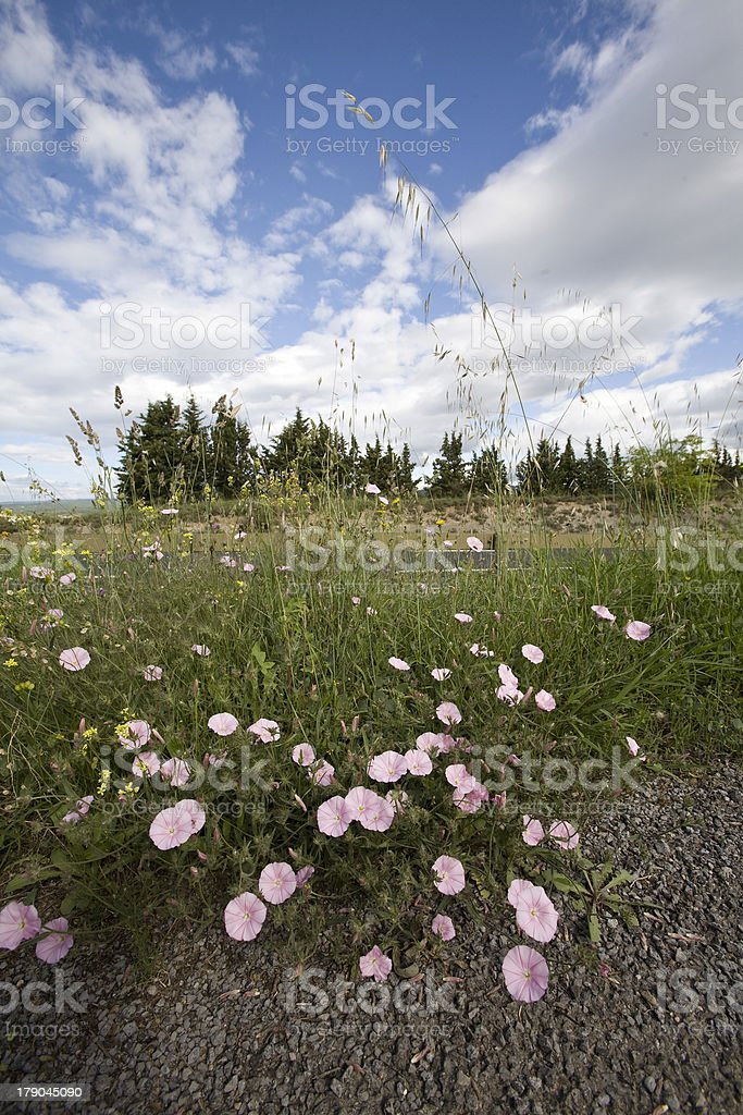 wild spring flowers by a roadside royalty-free stock photo
