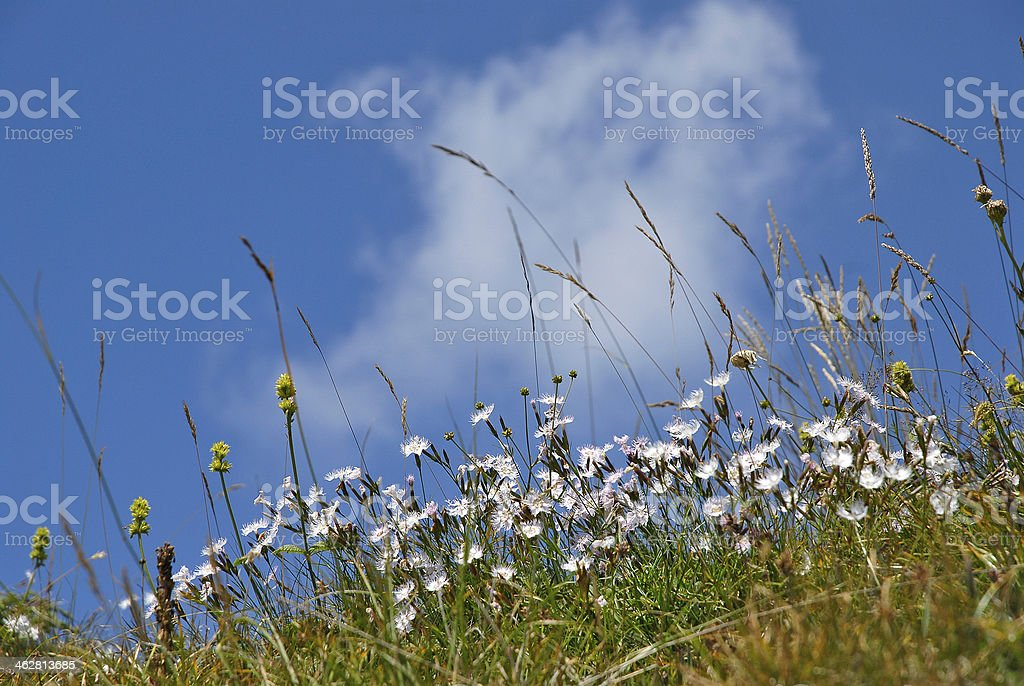Wild spring flowers green meadow royalty-free stock photo