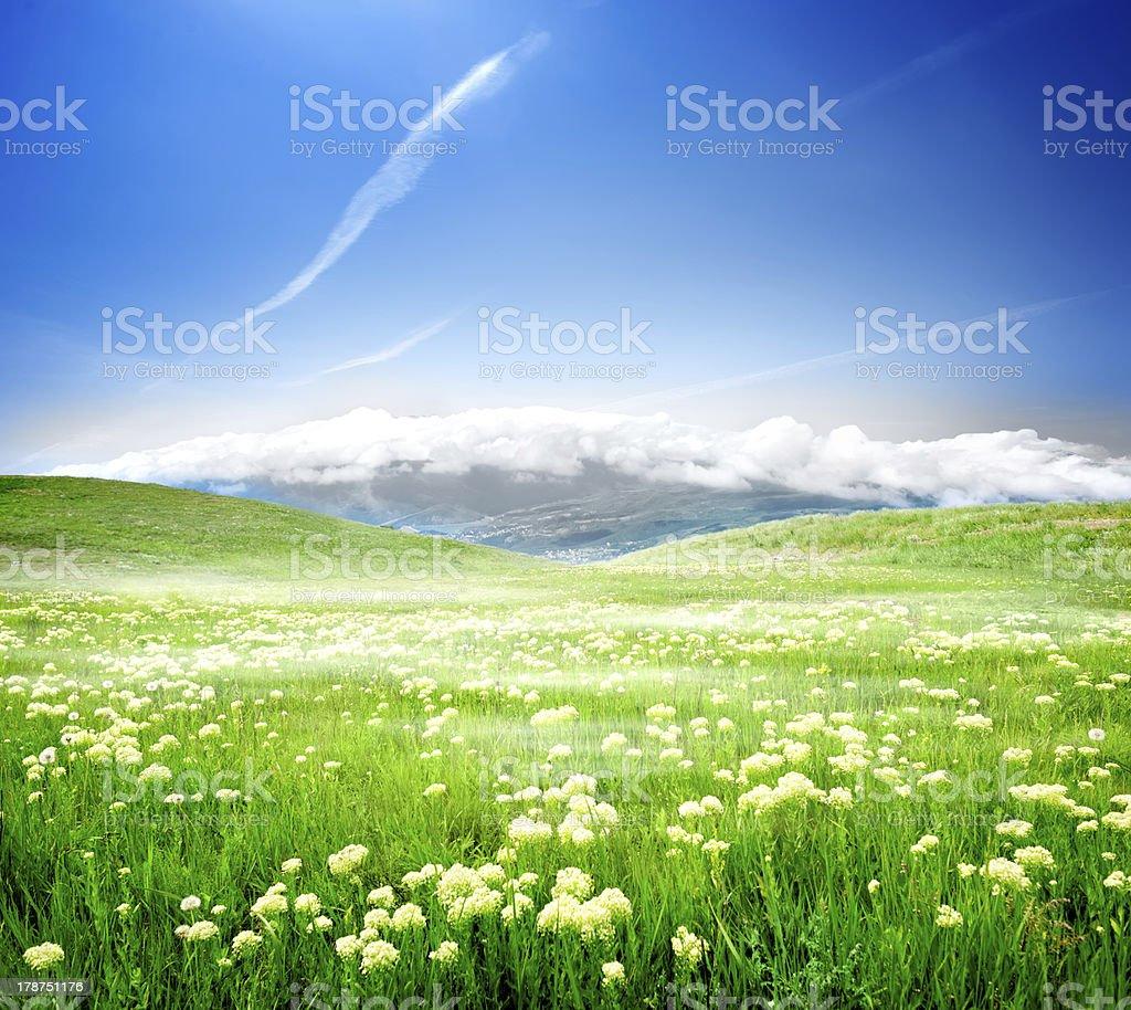 Wild spring flowers royalty-free stock photo