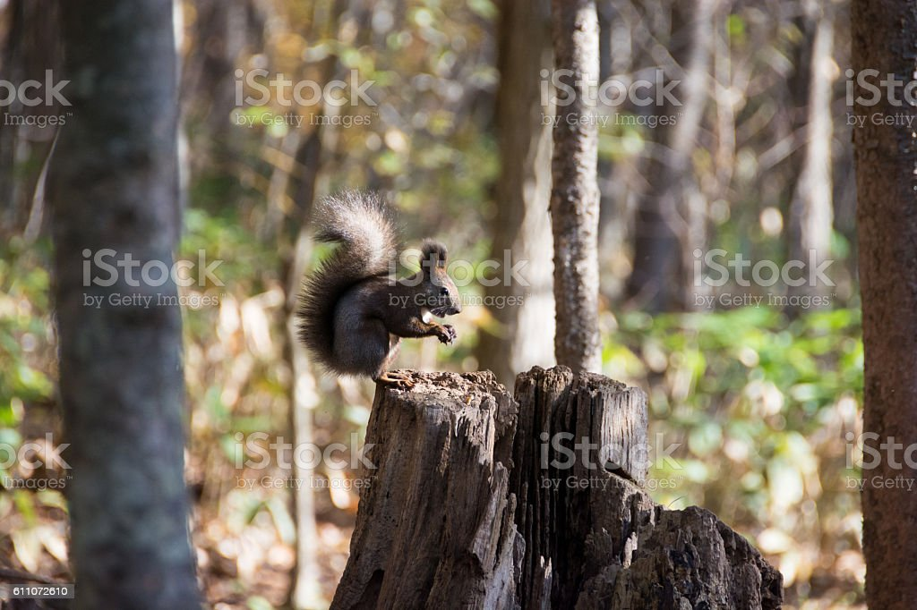 Wild squirrel stock photo
