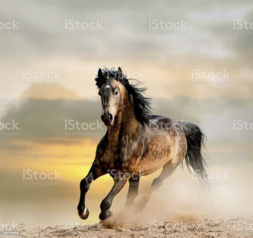 wild stallion stock photo