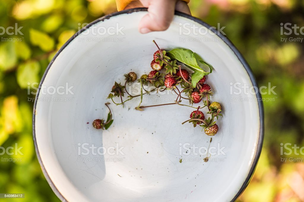 wild strawberries in a bowl stock photo