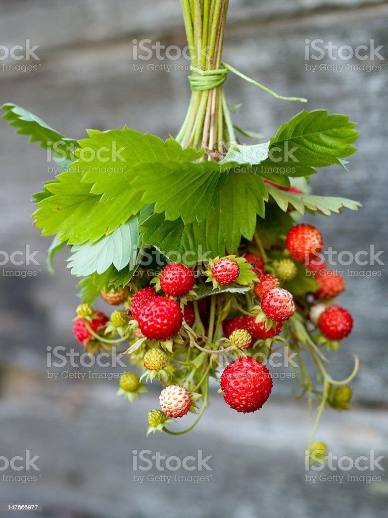 Wild strawberries royalty-free stock photo