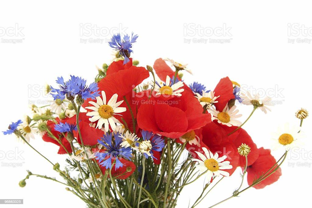 Wild summer flowers royalty-free stock photo