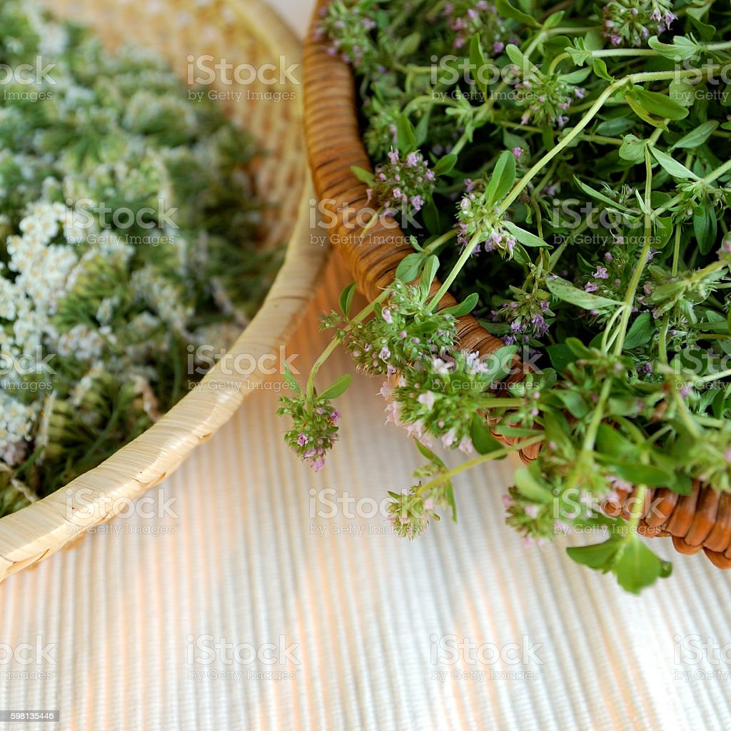 wild thyme and milfoil stock photo