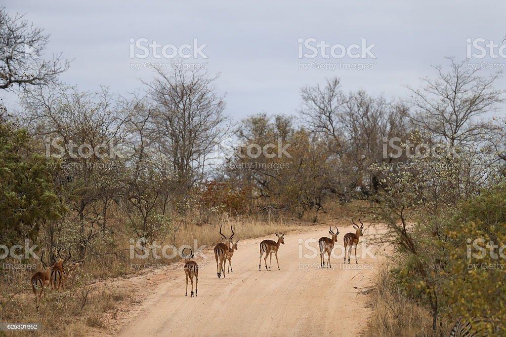 Wild Traffic stock photo