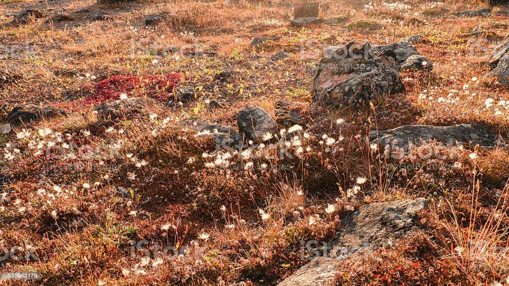 Wild trail flower stock photo