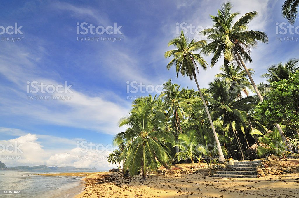 Wild Tropical Beach royalty-free stock photo
