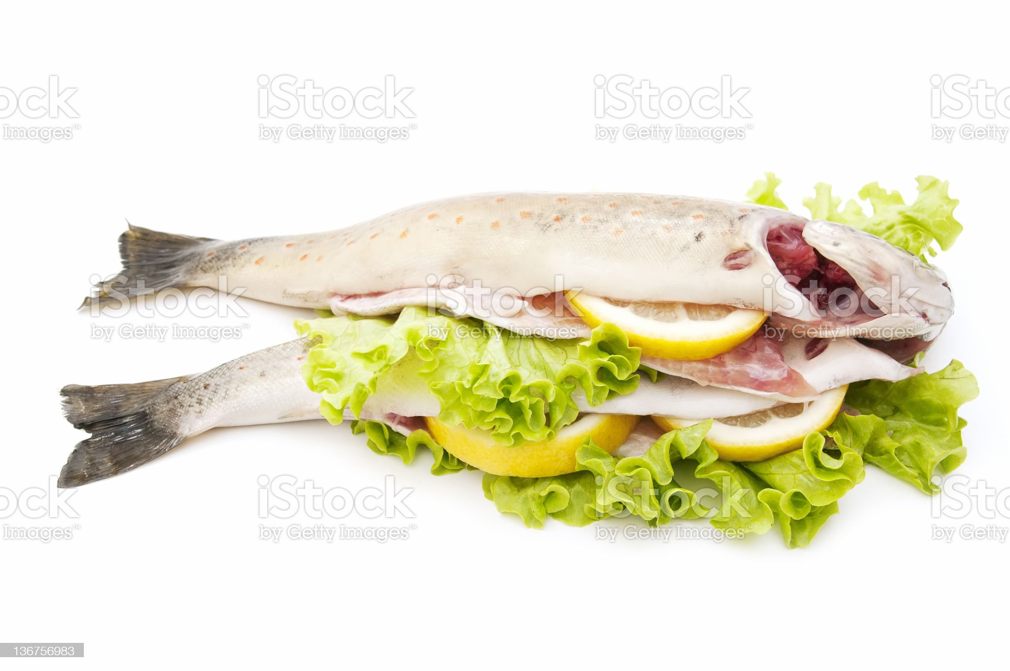 wild trout royalty-free stock photo