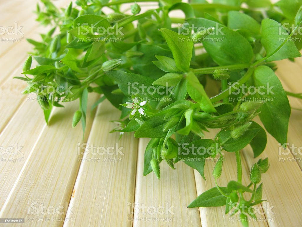 Wild vegetables chickweed stock photo