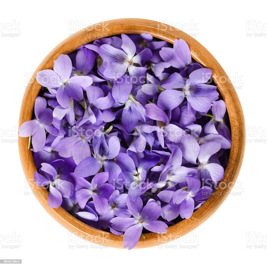 Wild violet flowers in wooden bowl over white stock photo