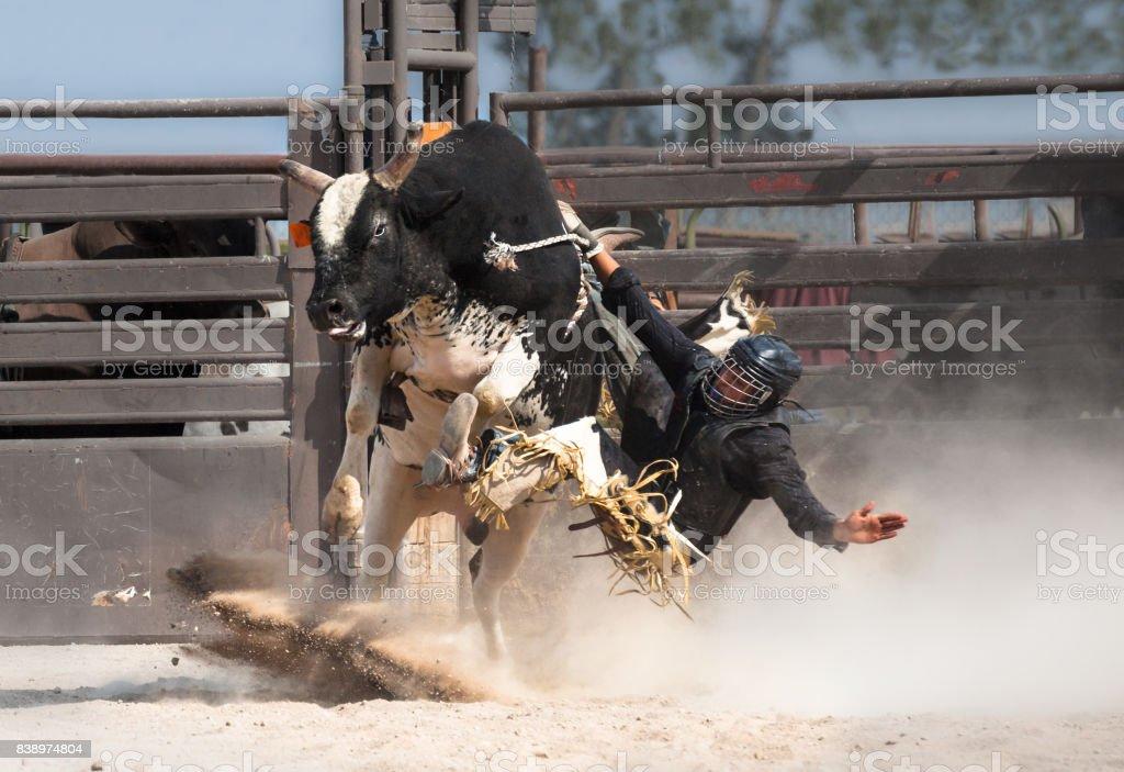 wild west rodeo cowboy riding a bucking black bull stock photo