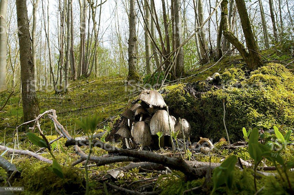 Wild floresta foto royalty-free