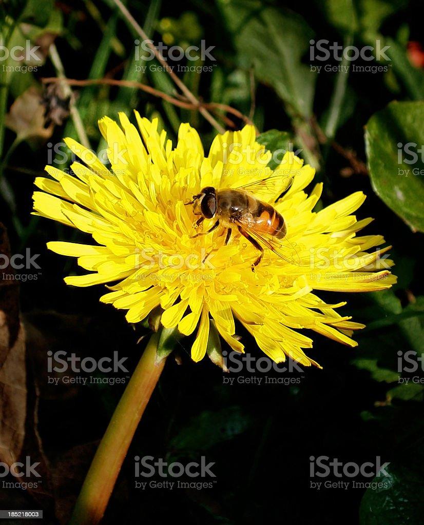 Wild yellow daisy. stock photo