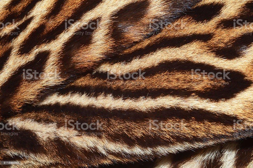 wildcat fur stock photo
