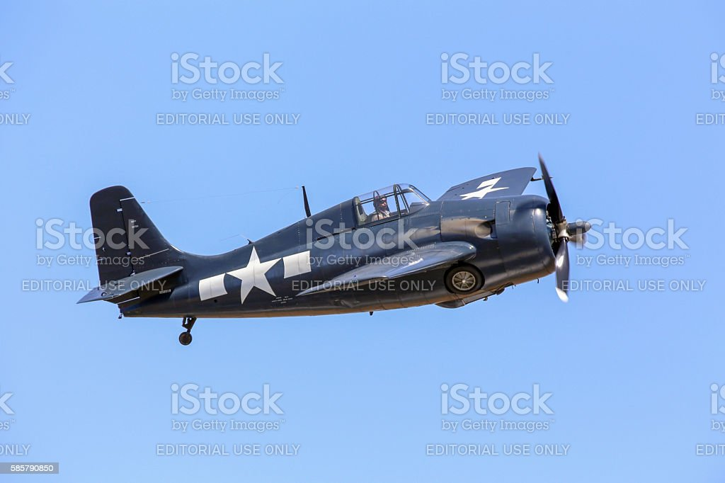 Wildcat stock photo