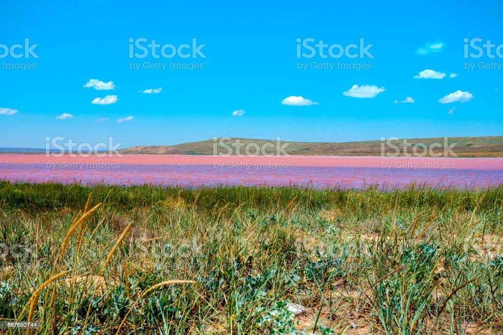 Wilde landscape with Pink lake stock photo