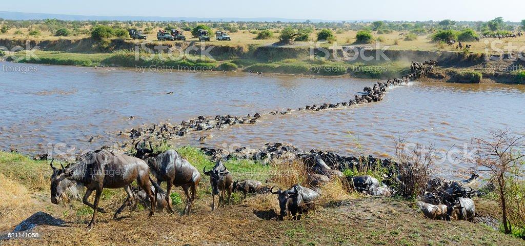 Wildebeest Herd Migration across the Mara River in Tanzania, Africa stock photo