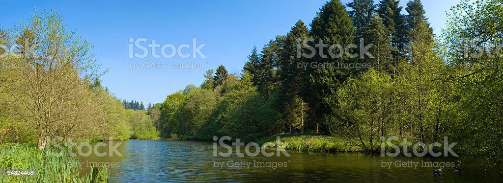 Wilderness forest lake royalty-free stock photo