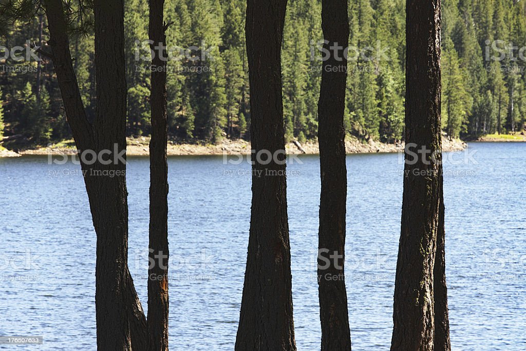 Wilderness Lake Shore Trees royalty-free stock photo