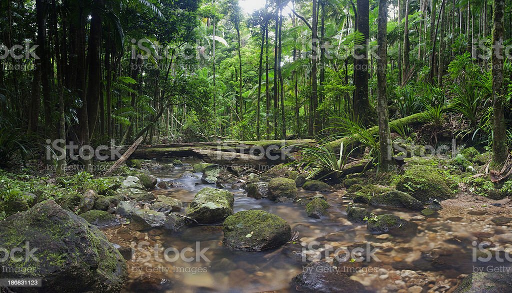 Wilderness Rainforest royalty-free stock photo