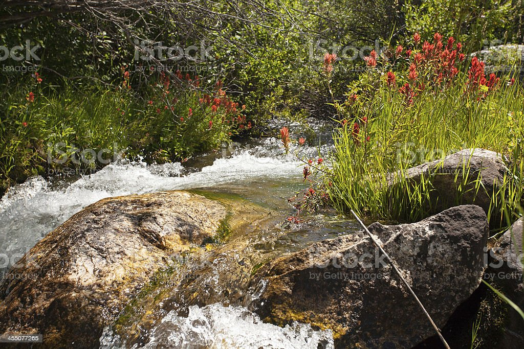 Wilderness River royalty-free stock photo