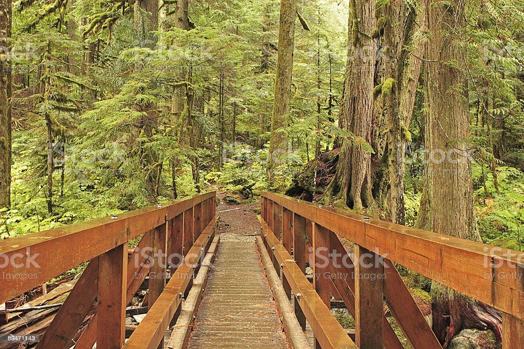 Wilderness Trail Bridge royalty-free stock photo