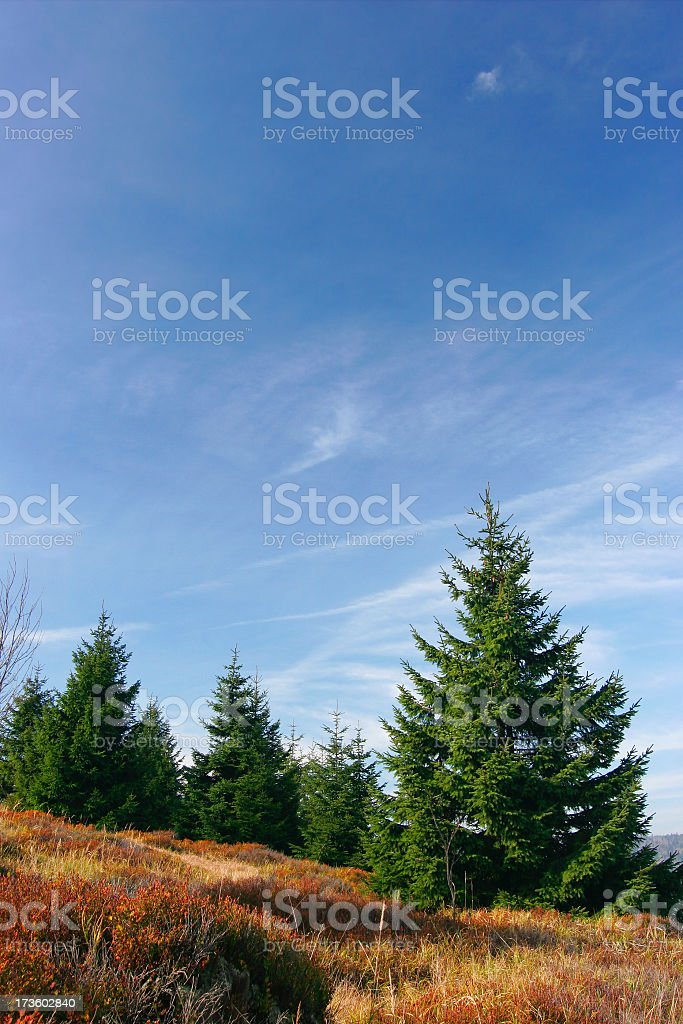 Wilderness VI royalty-free stock photo