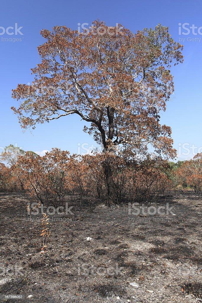 wildfire royalty-free stock photo